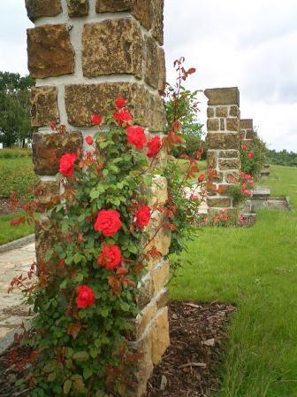 Lidice memorial rose garden