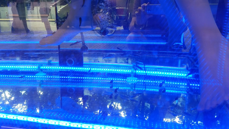fish tank with blue lighting at a massage parlour in prague
