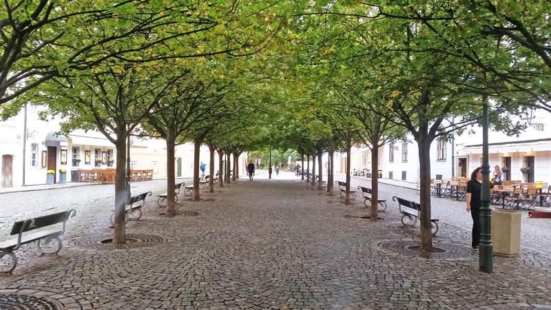 double row of trees with benches on a cobble stoned road