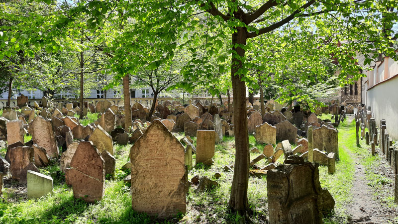 Prague Old Jewish Cemetery in May with new green leaves
